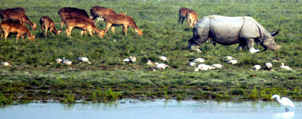 Kaziranga Wildlife Sanctuary Assam
