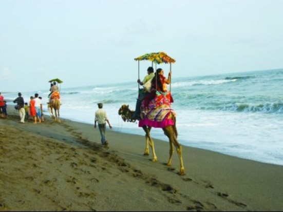 Camel Drive in Puri Beach