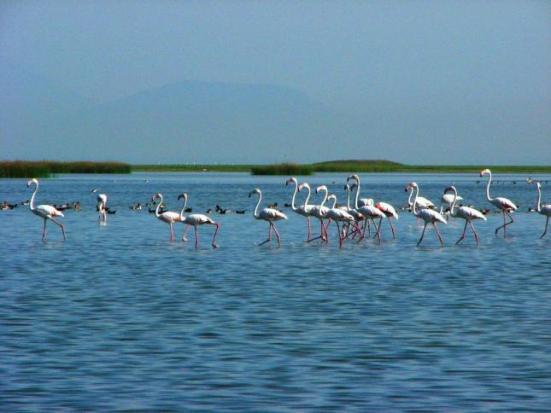 Birds At Chilka Lake Orissa