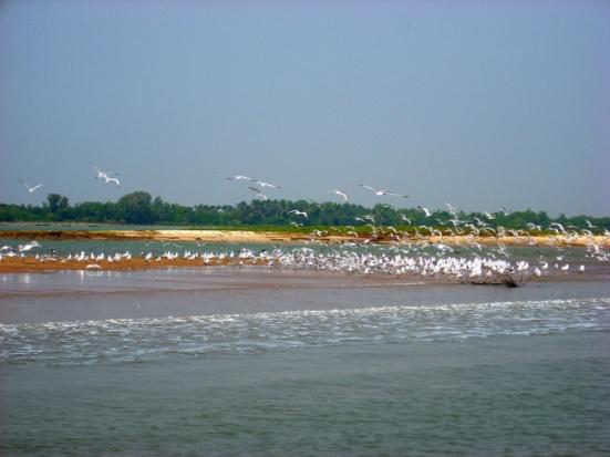 Chilka Lake Birds