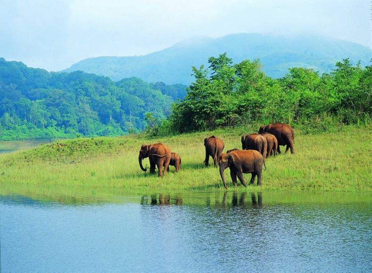 Elephant Sanctuary In Kerala